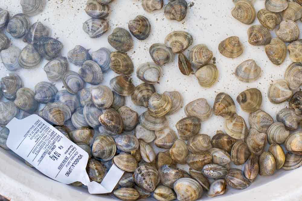 Small Clams - Vongola - at a Market in Naples