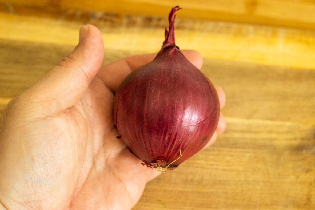 Red Onion in Hand