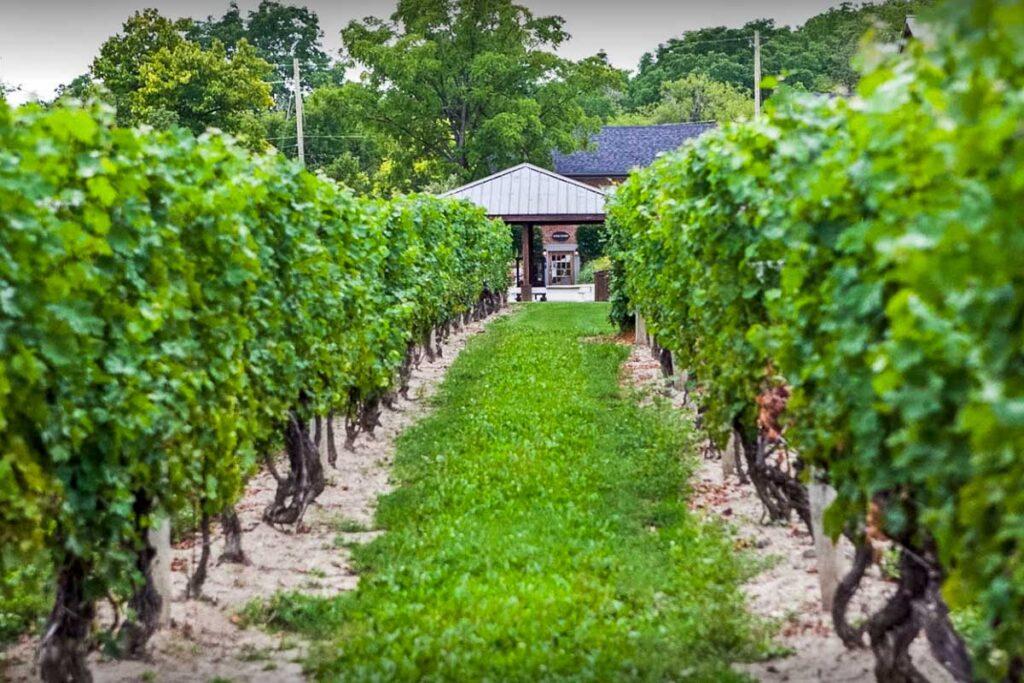 Ontario Winery Stock Photo